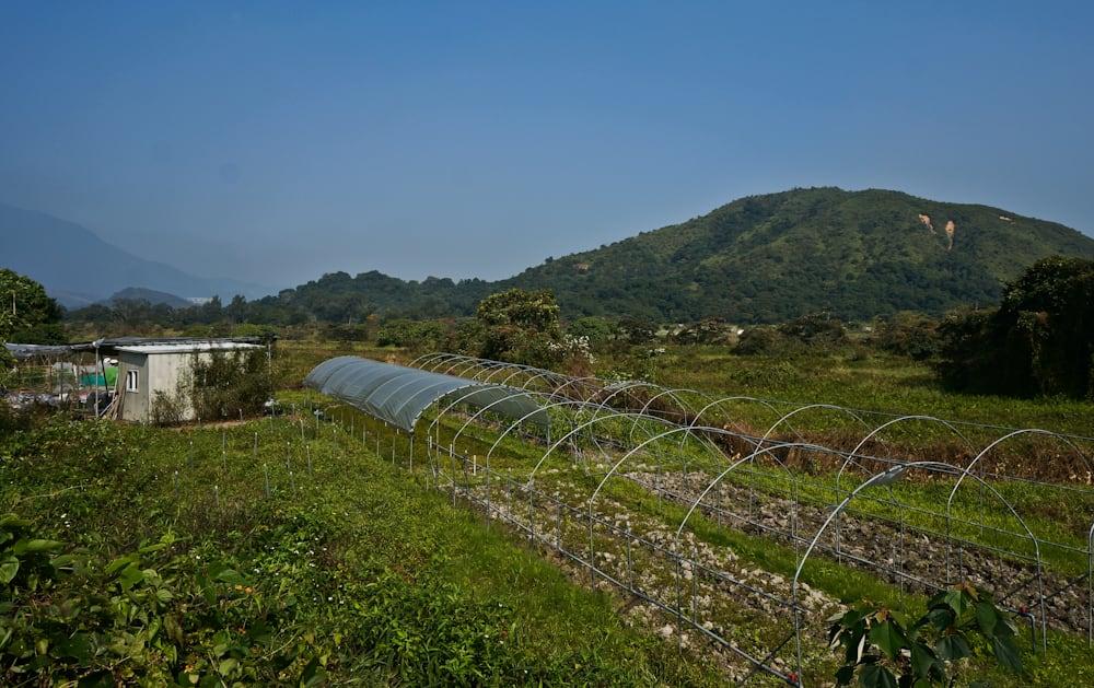 Nam Chung Village 南涌村