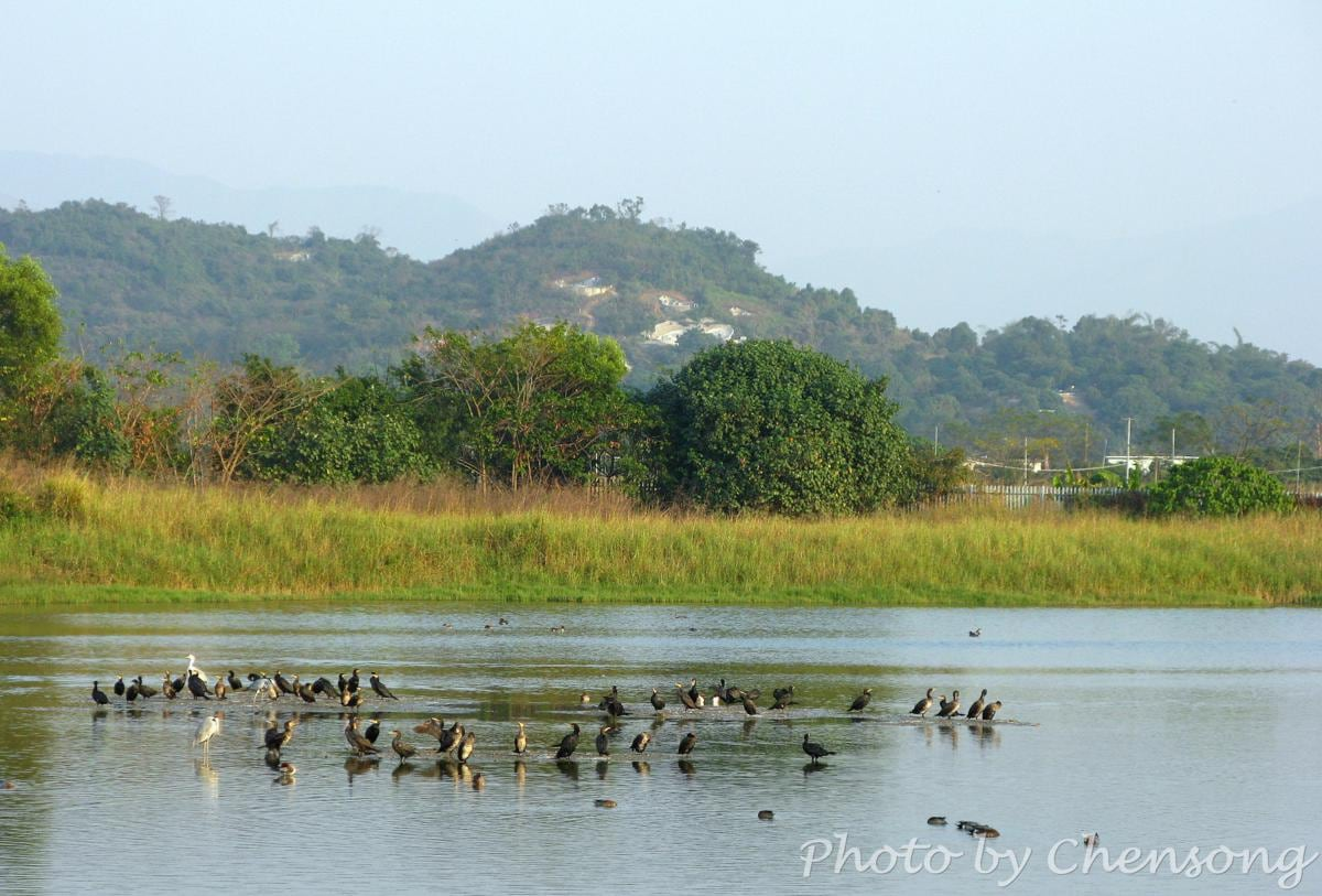 Hong Kong Wetland Park - Bird Watching (Photo by Chensong)