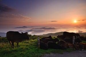 Tai Mo Shan, 957m, Highest Peak in Hong Kong