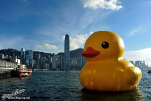 Giant Yellow Rubber Duck in Victoria Harbor Hong Kong
