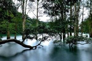 Trees in Water at Shing Mun Reservoir