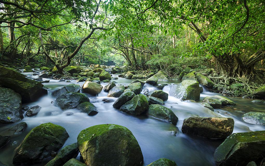 Tai Shing Stream at Tai Mo Shan 大城石澗