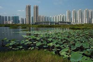 Hong Kong Wetland Park Lotus Pond | 香港濕地公園