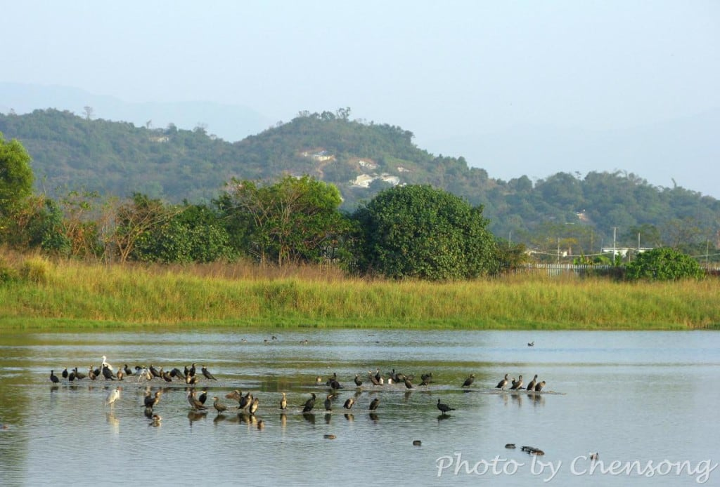 Hong Kong Wetland Park - Bird Watching | 香港濕地公園觀鳥
